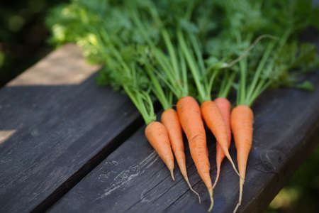 Close up of fresh carrot on rustic wooden background, top view Stock Photo