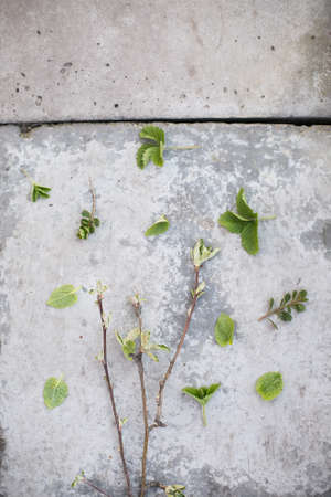 green grass frame and old concrete Imagens - 158495477