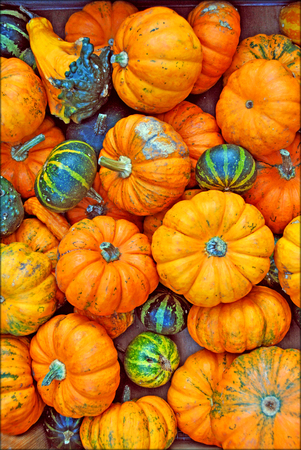 Cucurbita decoration background and wallpapers in top high quality prints Stock Photo
