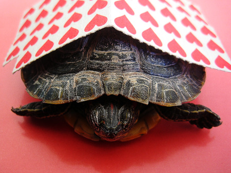 Small red stick papers with a turtle background macro wallpaper Reklamní fotografie