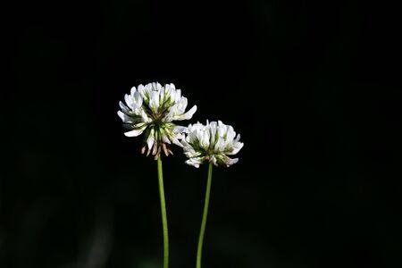 Wild flower macro background