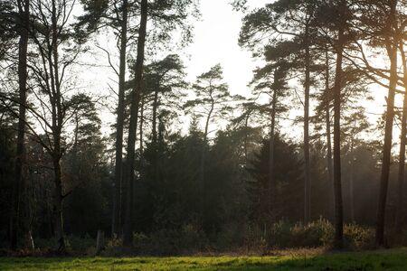 Sun gazing in european forest background