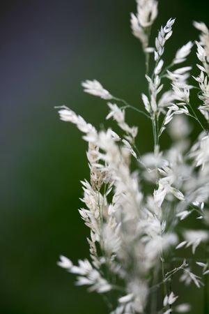 Wild flower with fog macro background
