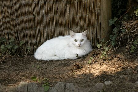 White cat amazing portrait macro background wallpapers high quality fine art prints products