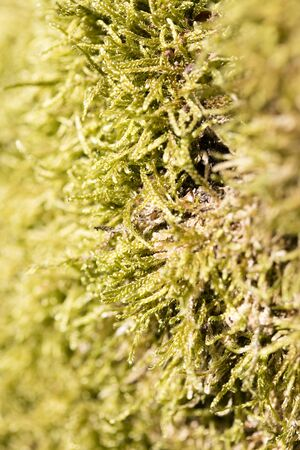 Lichens on tree macro background fine art in high quality prints products