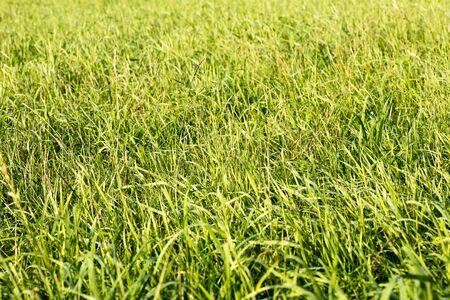 Grass macro background fifty megapixels  modern fine green art Stock Photo - 133493436