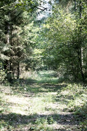 Walking on forest old road nature scape north germany fifty megapixels dorsten