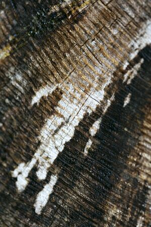 Wood surface macro abstract close up fifty megapixels high quality 스톡 콘텐츠