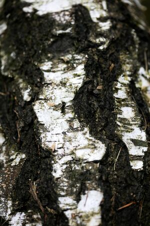 Tree bark abstract macro background fine art in high quality prints fifty megapixels