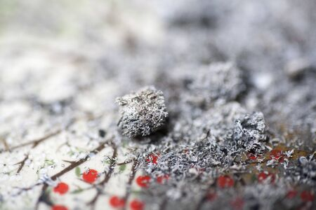 Ashes from cigarette joint macro background fine art in high quality prints Stock Photo