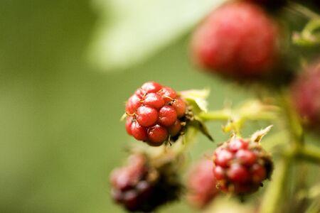 Wild fruits berries macro background high quality prints