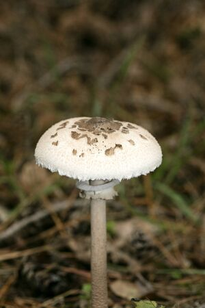 Wild mushrooms on nature macro background fifty megapixels prints