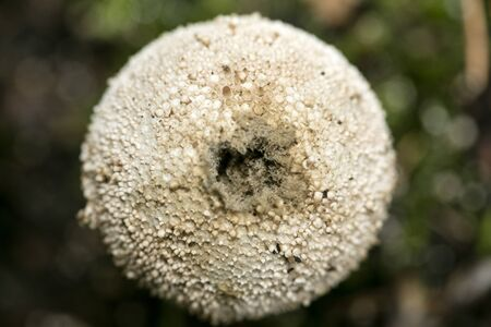 Mushroom close up in wild nature background fifty megapixels
