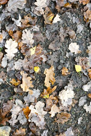 Dead leafs on ground macro background fifty megapixels