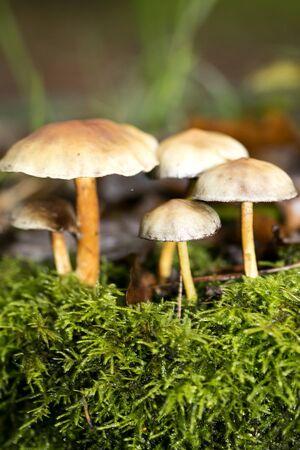 November mushrooms in nature macro background wallpaper
