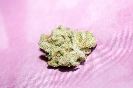 Cannabis bud super lemon haze macro background fifty megapixels