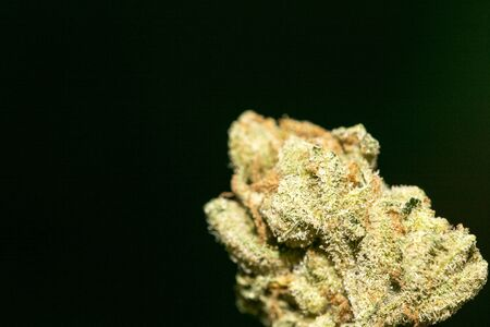Cannabis macro in black background fifty megapixels