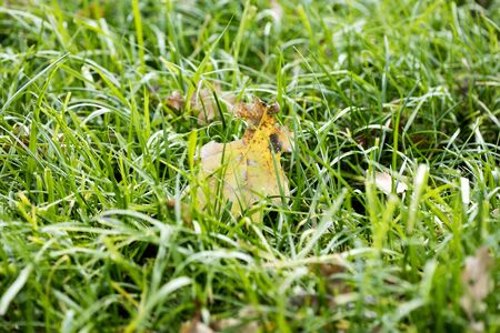 Grass close up background high quality fifty megapixels