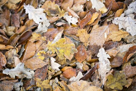 Dead autumn leafs macro background high quality Stock Photo