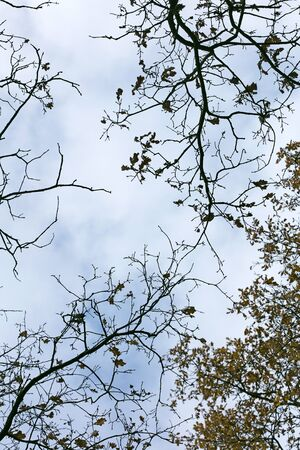 Tree leafs ans sky background high quality fifty megapixels