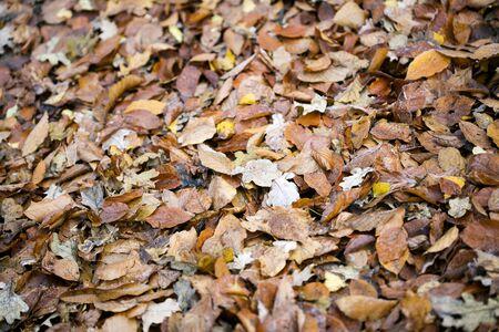Dead autumn leafs macro background high quality