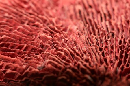 Dried mushroom potpourri cup abstract close up fifty megapixels high quality
