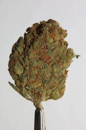 Cannabis close up super skunk lemon haze background stock photos high quality