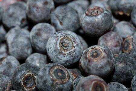 Wild blue berries macro background high quality