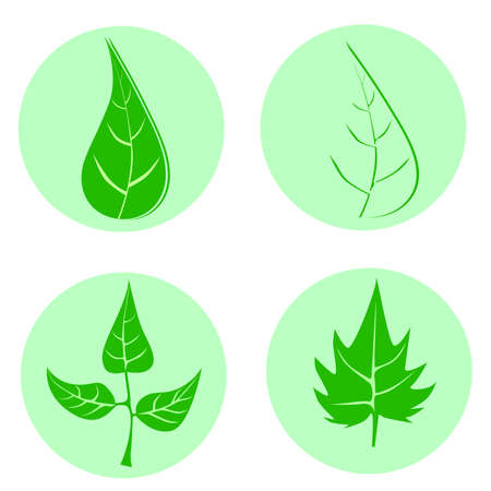 Set of green leaves design elements. This image is a vector illustration.Leaves icon