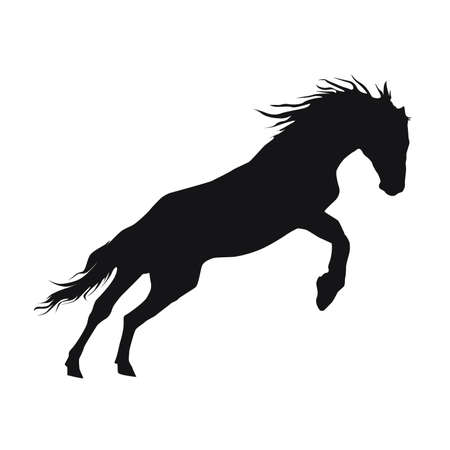 rearing horse fine vector silhouette - black over white.