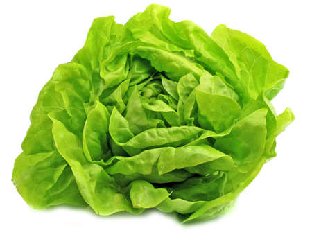 head close up: Fresh salad lettuce in white background