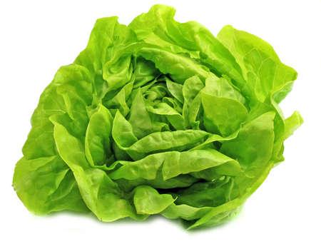 Fresh salad lettuce in white background