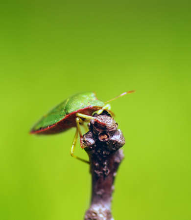 investigative: Green insect close up