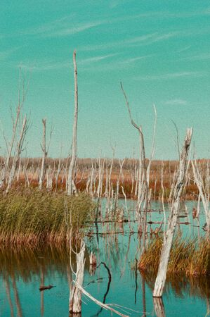 nude outdoors: Naked trees in swamp illustration Stock Photo