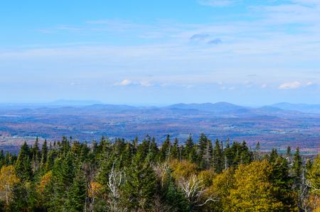 ash: Mountain ash in Canada