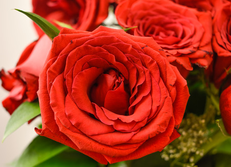 flourished: Beautiful flourished red roses Stock Photo