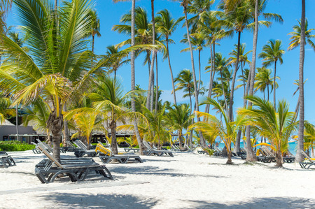 People relax on the beach among palm trees in the resort of Punta Cana.