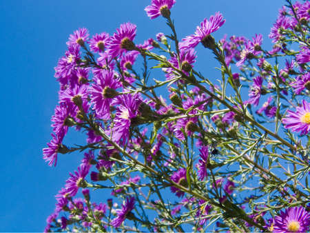 A bunch of purple flowers looking into cloudless sky photo