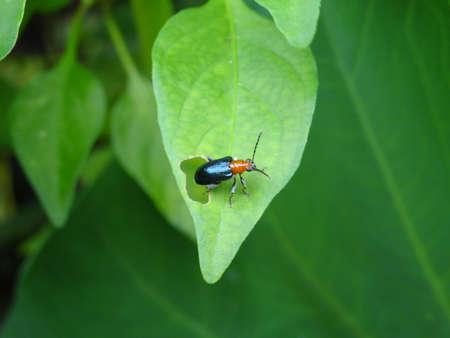 A colourful   bug sitting on a leaf photo