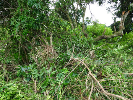 deforestacion: La deforestaci�n de cerca. Foto tomada en Malasia.