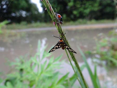 A black moth and a ladybird on a leaf photo