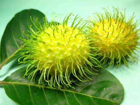 yellowish: Yellowish rambutan or Nephelium lappaceum on light green background, photo taken in Malaysia Stock Photo