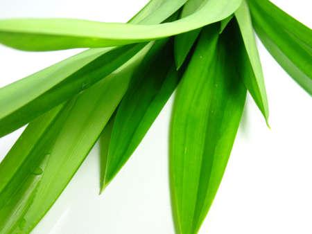 pandan leaves on white background