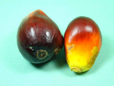 red palm oil: palm oil seed in light green background