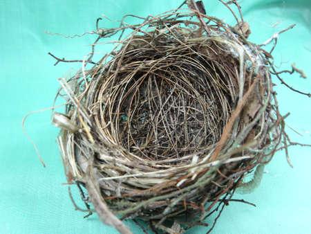 nido de pajaros: Un peque�o nido de p�jaro sobre fondo verde claro Foto de archivo