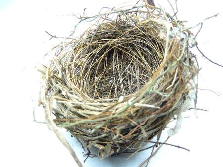 nido de pajaros: Un peque�o nido de p�jaro sobre fondo blanco Foto de archivo