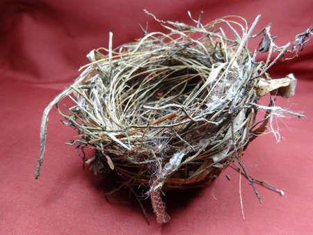 nido de pajaros: Un peque�o nido de p�jaro sobre fondo marr�n