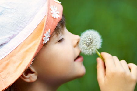 a little girl in a hat closeup sniffing dandelions on a green background photo