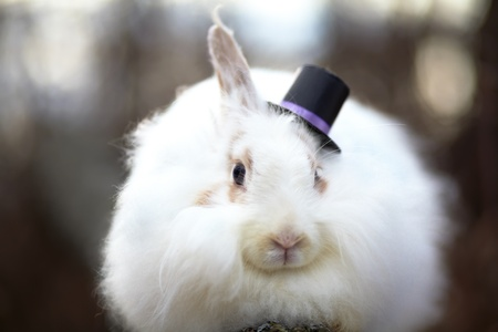 white rabbit in the hat close up photo
