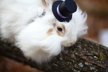 white rabbit in a top hat on wood close up photo